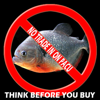 Specialty pets nitro wv 304 755 2437 coral fish for Rare freshwater fish for sale