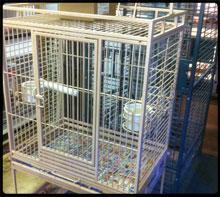 Specialty Pets Llc Nitro West Virginia 304 755 2437 Coral